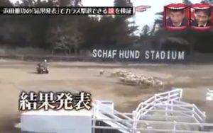 水曜日のダウンタウン 浜田雅功の「結果発表」でカラス撃退できる説